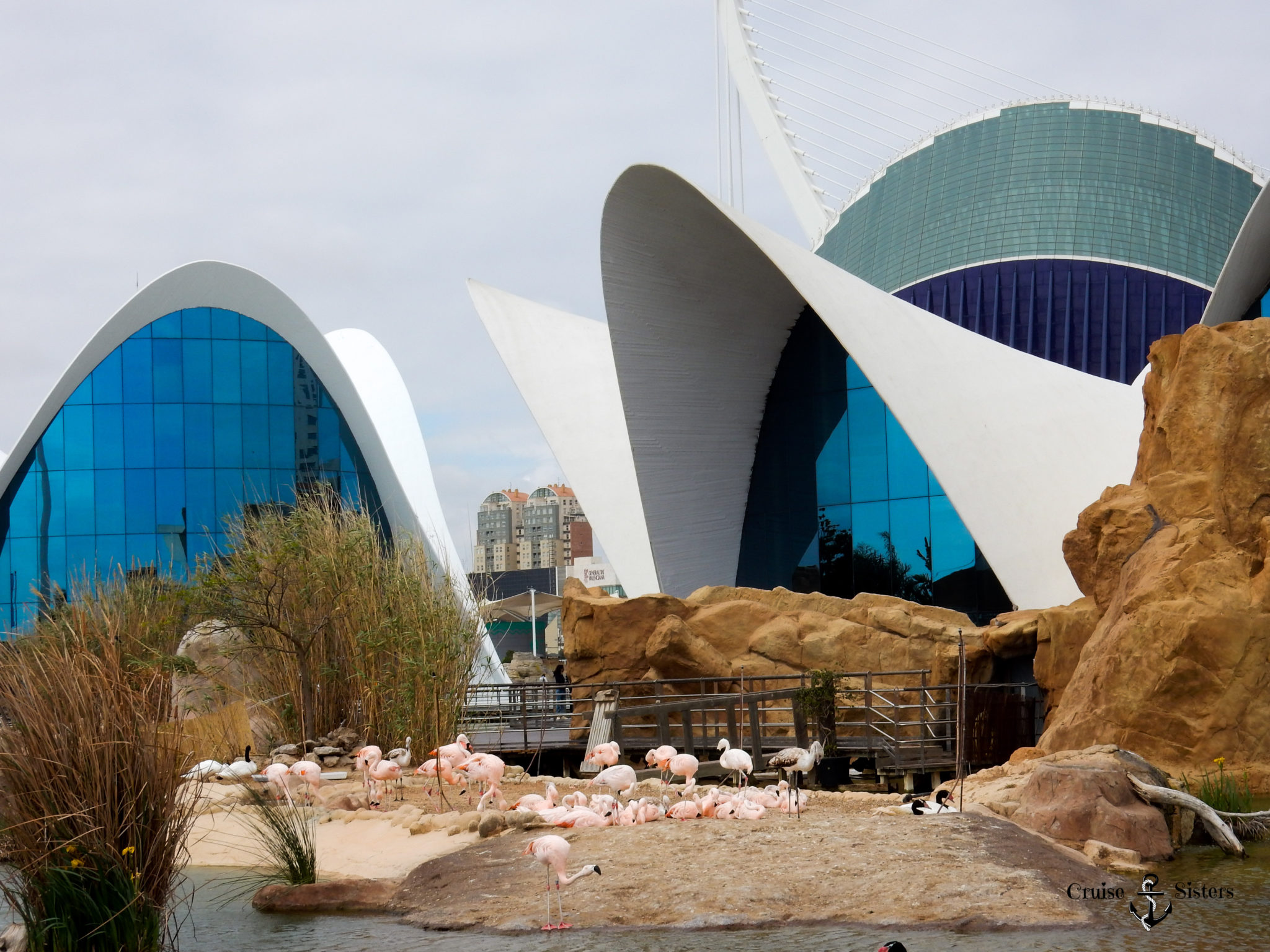 Oceanografic Aquarium in Valencia