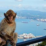 Gibraltar: History and the Famous Wild Monkeys